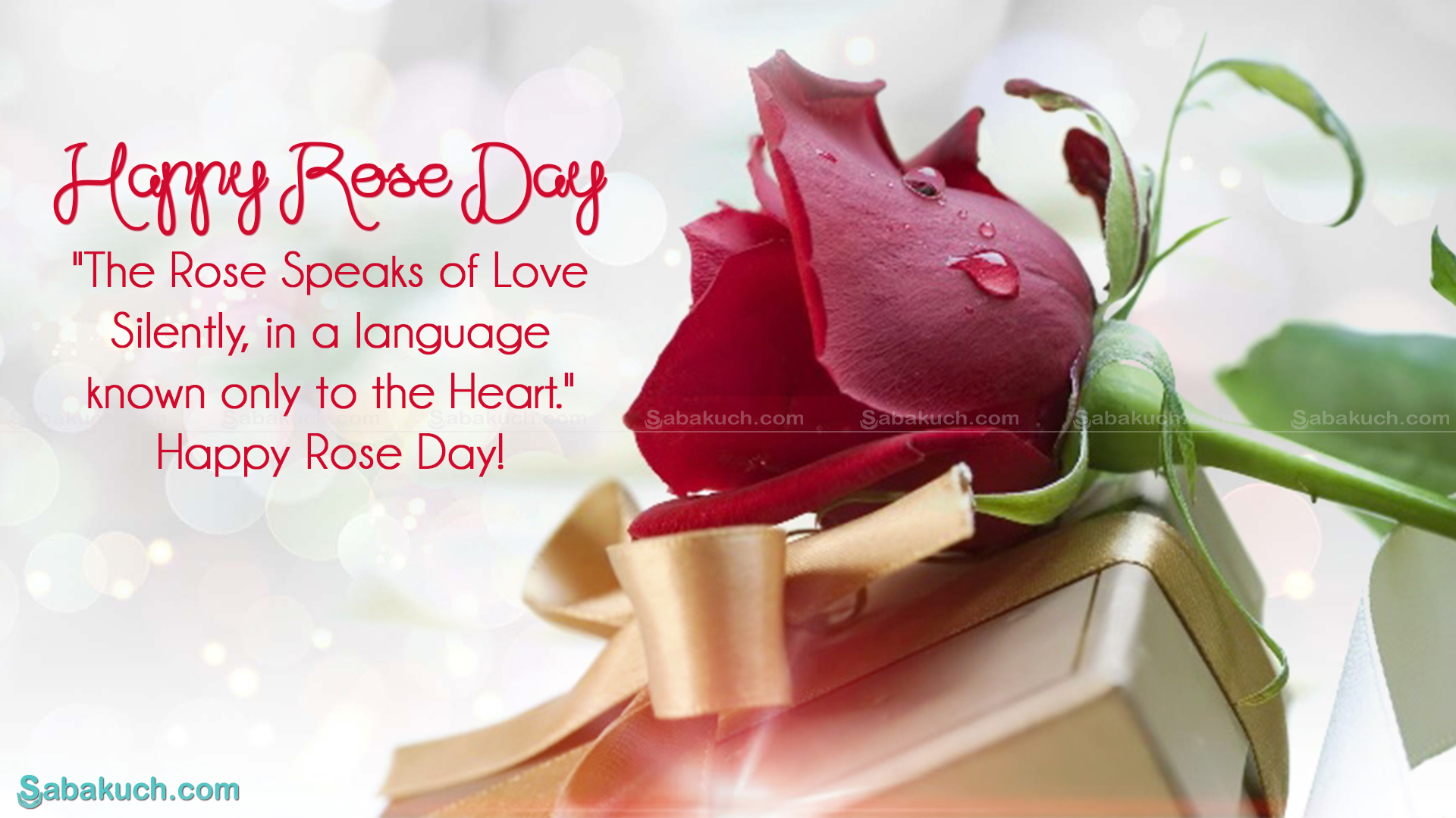 rose day..d