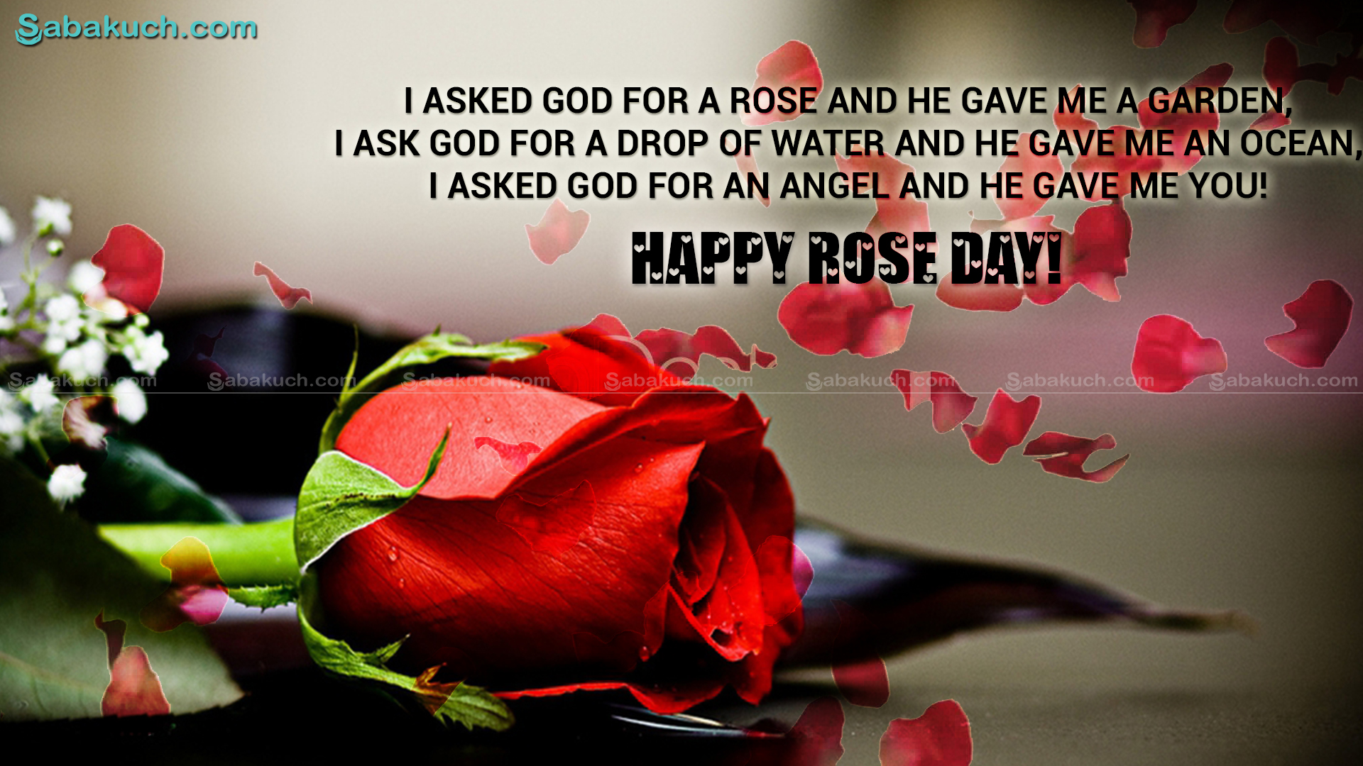 rose day ..